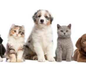 寵物業復工過半,期待物流正常化